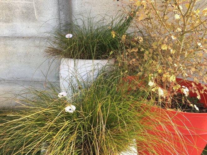 Letagereaconfettis_fleurs verre decoration jardin interieur exterieur